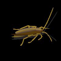 roach-idle